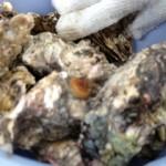 蒸し牡蠣2